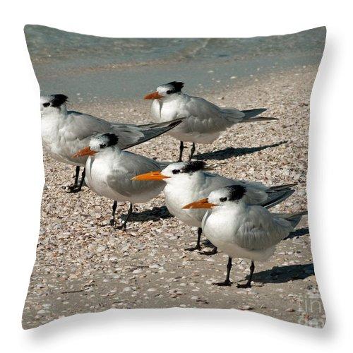 Birds Throw Pillow featuring the photograph Gaggle Of Gulls by Stephen Whalen