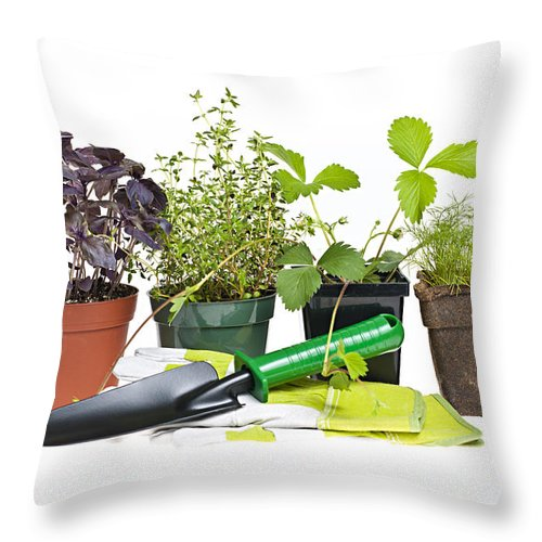 Gardening Throw Pillow featuring the photograph Gardening Tools And Plants by Elena Elisseeva