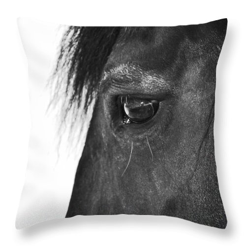 Horse Throw Pillow featuring the photograph Gentle Soul by Traci Cottingham
