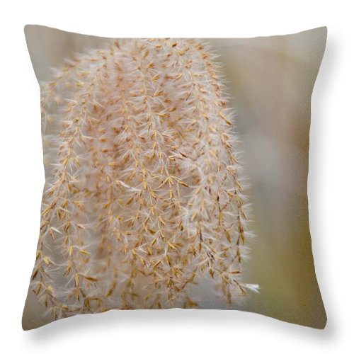 Flower Throw Pillow featuring the photograph Gentle Whisper by Trish Tritz