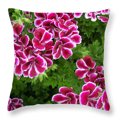 Flower Throw Pillow featuring the photograph Geranium by Corinne Elizabeth Cowherd