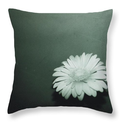 Gerbera Throw Pillow featuring the photograph Gerbera by Cheryl Hucke