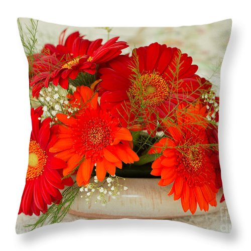 Gerbera Hybrida Throw Pillow featuring the photograph Gerbera Daisies by Louise Heusinkveld