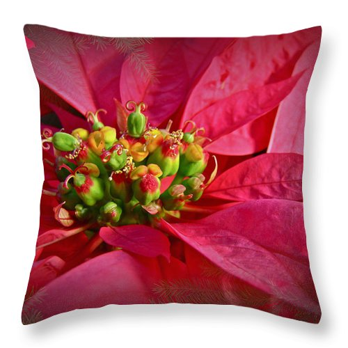 Poinsettia Throw Pillow featuring the photograph Get To The Heart Of It by Mother Nature