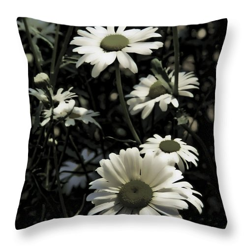 Ghostly Throw Pillow featuring the photograph Ghostly Daisies by Sheri Bartoszek