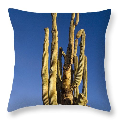 Giant Throw Pillow featuring the photograph Giant Saguaro Cactus Portrait With Blue Sky by James BO Insogna