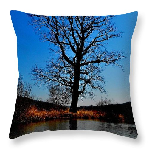 Tree Throw Pillow featuring the photograph 'giants Live Here' by Donald Black