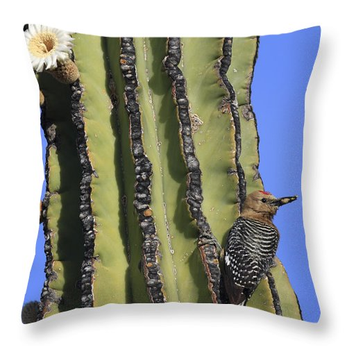 Mp Throw Pillow featuring the photograph Gila Woodpecker Melanerpes Uropygialis by Cyril Ruoso