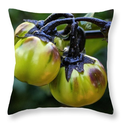 Egg Plant Throw Pillow featuring the photograph Gilo Black Stem by Susan Herber