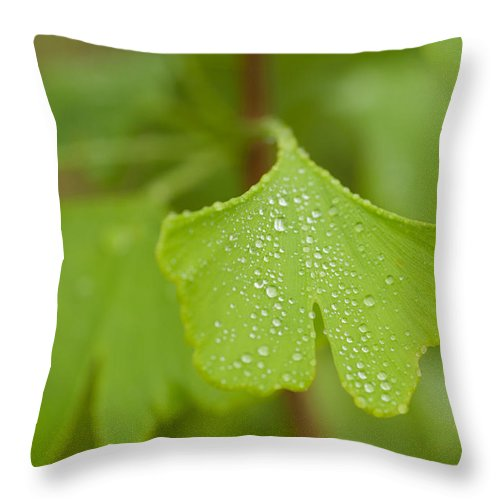 Shallow Depth Of Field Throw Pillow featuring the photograph Gingko by Joye Ardyn Durham
