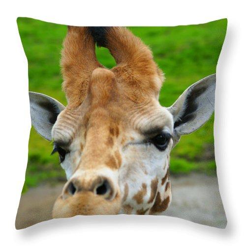 Giraffes Throw Pillow featuring the photograph Giraffe In The Park by Randy Harris