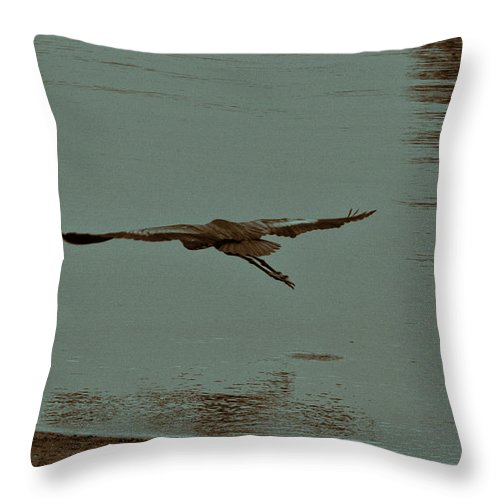 Blue Heron Throw Pillow featuring the photograph Gliding Inches Above The Water by Douglas Barnard