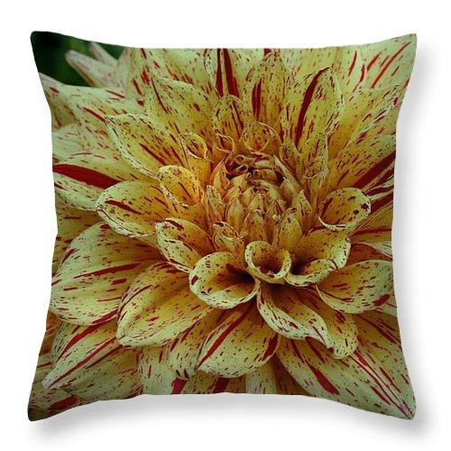 Outdoors Throw Pillow featuring the photograph Glorious Gloriosa by Susan Herber