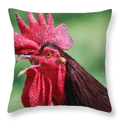 Nature Throw Pillow featuring the photograph Go Team by Michael L Gentile