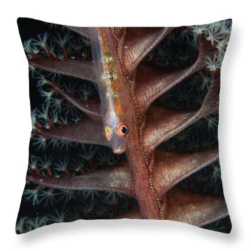 Osteichthyes Throw Pillow featuring the photograph Goby On A Sea Pen, Indonesia by Todd Winner