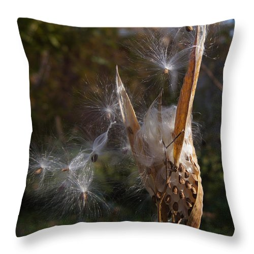 Seed Throw Pillow featuring the photograph Going To Seed by Robert E Alter Reflections of Infinity LLC
