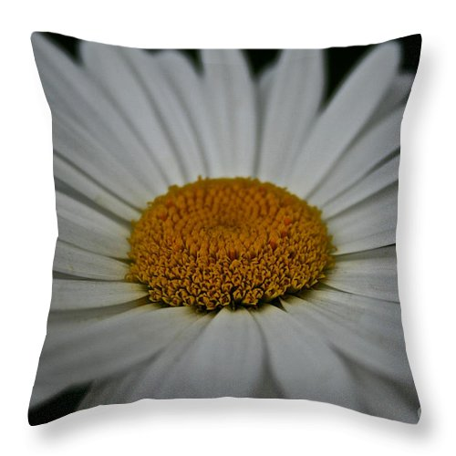 Minnesota Throw Pillow featuring the photograph Gold Crown by Susan Herber