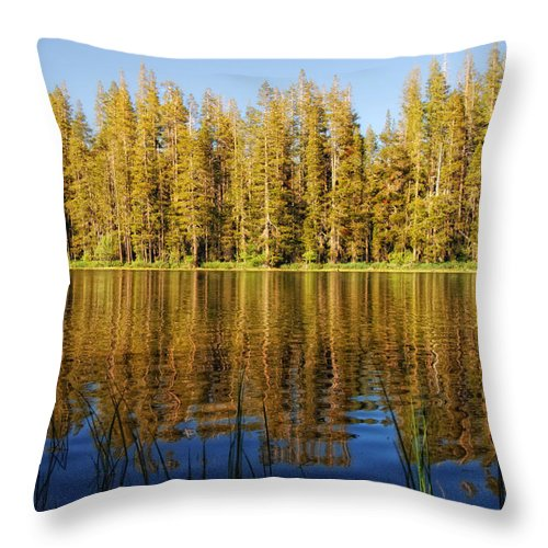 Forest Throw Pillow featuring the photograph Golden Days by Donna Blackhall