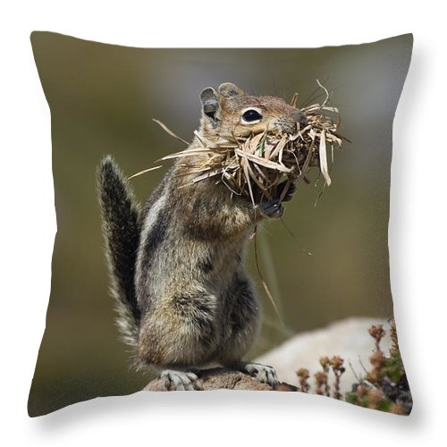 Mp Throw Pillow featuring the photograph Golden-mantled Ground Squirrel by Konrad Wothe