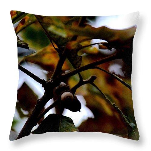 Golden Oak At Nightfall Throw Pillow featuring the photograph Golden Oak At Nightfall by Maria Urso