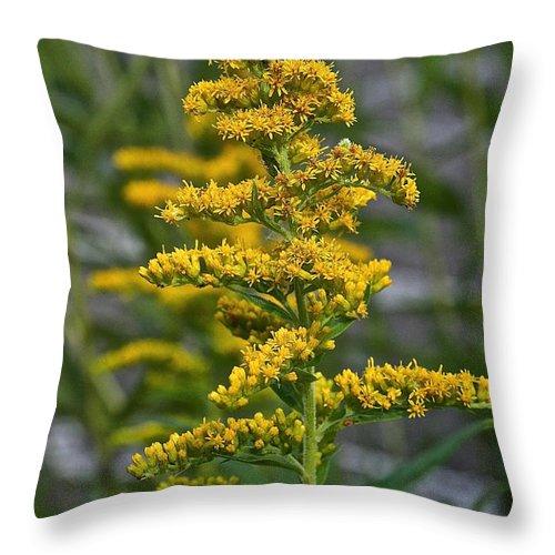 Outdoors Throw Pillow featuring the photograph Golden Rod by Susan Herber
