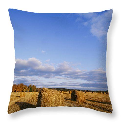 Scenic Views Throw Pillow featuring the photograph Golden Rolls Of Hay In A Field by Mattias Klum