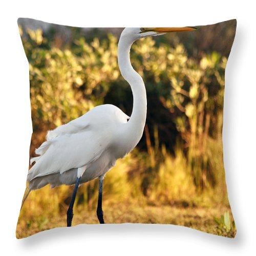 Egret Throw Pillow featuring the photograph Golden Sunset by Maria Nesbit