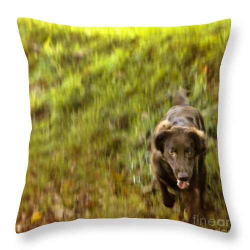 Lilly Throw Pillow featuring the photograph Gonna Get You by Angel Ciesniarska
