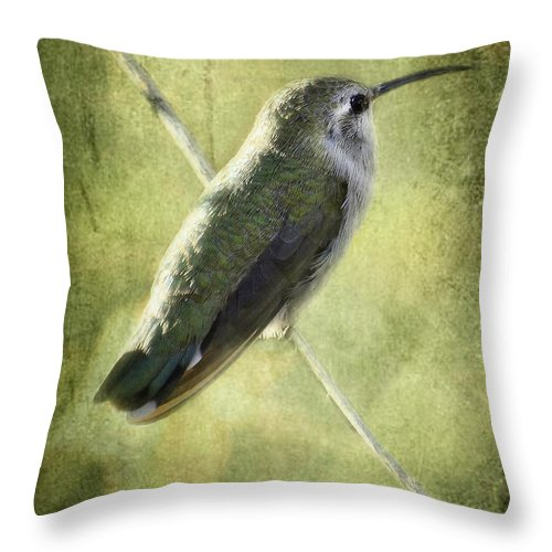 Hummingbird Throw Pillow featuring the photograph Good Things Come In Small Packages by Saija Lehtonen