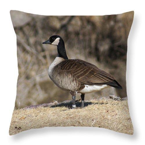Goose Throw Pillow featuring the photograph Goose Profile by Lori Tordsen