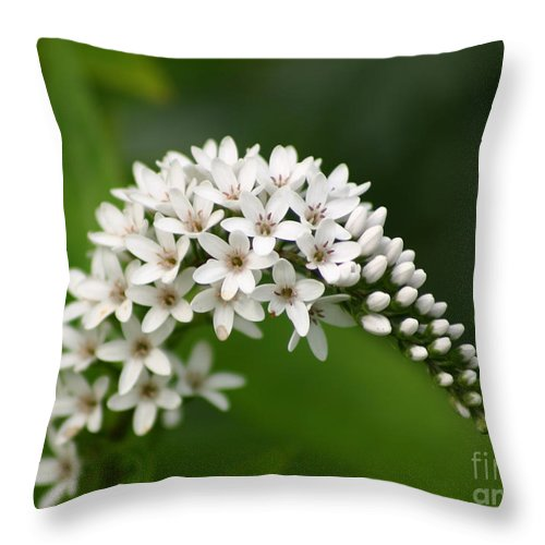 Gooseneck Throw Pillow featuring the photograph Gooseneck Flowers And Buds by Robert E Alter Reflections of Infinity