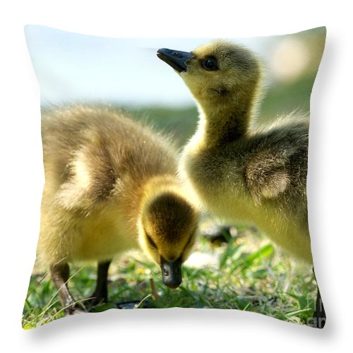 Canada Geese Throw Pillow featuring the photograph Goslings 6 by Sharon Talson