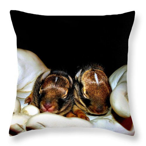 Bunny Throw Pillow featuring the photograph Got The Whole World by Art Dingo