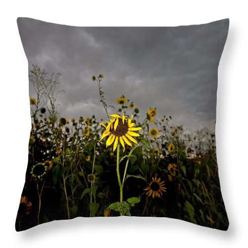 Clouds Throw Pillow featuring the photograph Goth Sunflower by Peter Tellone