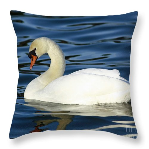 Graceful Reflections - Mute Swan Throw Pillow featuring the photograph Graceful Reflections - Mute Swan by Inspired Nature Photography Fine Art Photography