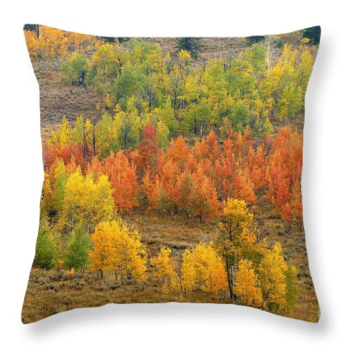 Bronstein Throw Pillow featuring the photograph Grand Teton Fall Color by Sandra Bronstein