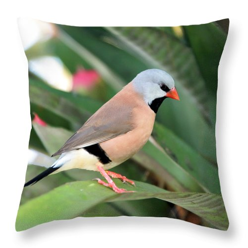 Green Throw Pillow featuring the photograph Grass Finch by Glennis Siverson