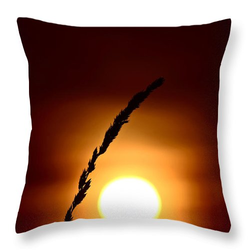 Plant Throw Pillow featuring the photograph Grass Head Silhouetted By Rising Sun by Mark Duffy