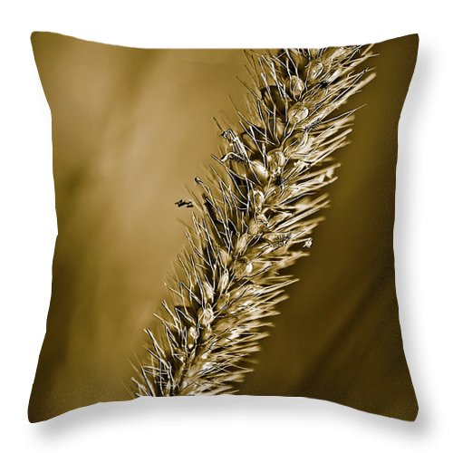 Grass Seed Throw Pillow featuring the photograph Grass Seedhead by Onyonet Photo Studios