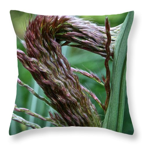 Landscape Throw Pillow featuring the photograph Grass Worm by Susan Herber