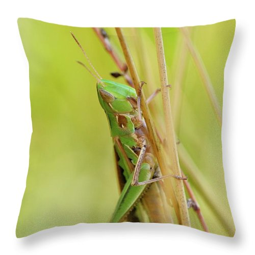 Close-up Throw Pillow featuring the photograph Grasshopper In Green by JD Grimes