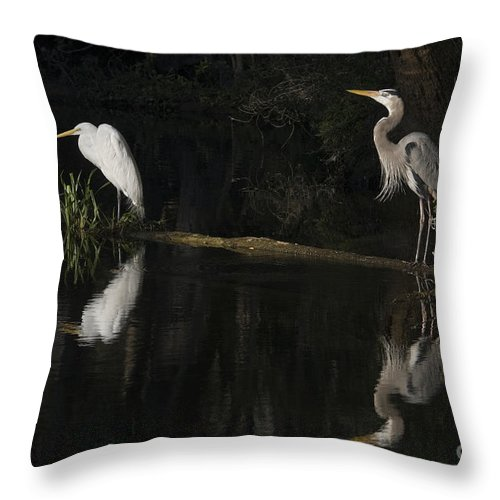 Birds; Ellie Schiller Homosassa Springs Wildlife State Park; Florida; Fresh Water; Great Blue Heron; Ardea Herodia; Heron; Great Egret; Ardea Alba; Egret; Low Light; Other Keywords; Places; Reflection; State Parks; Water; Wading Birds; Big Birds; Wildlife; Nature; Throw Pillow featuring the photograph Great Blue Heron And Great Egret At Day's End by John Arnaldi
