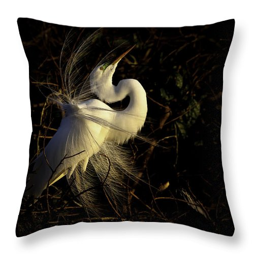 Great Egret Throw Pillow featuring the photograph Great Egret In Great Light by Rob Travis