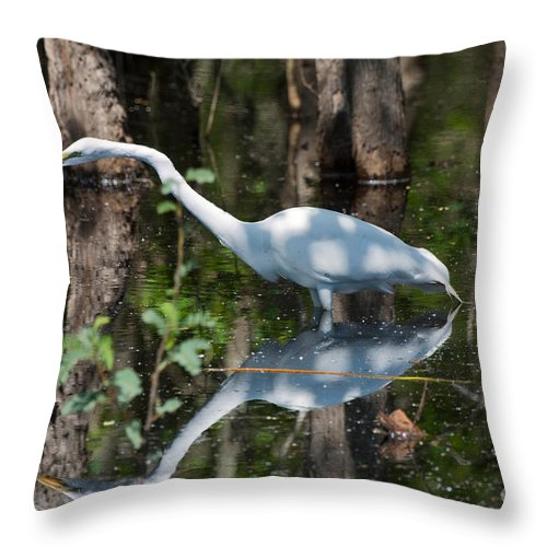 Egret Throw Pillow featuring the photograph Great Egret by Louise Heusinkveld