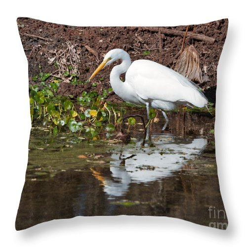 Great Egret Throw Pillow featuring the photograph Great Egret Searching For Food In The Marsh by Louise Heusinkveld