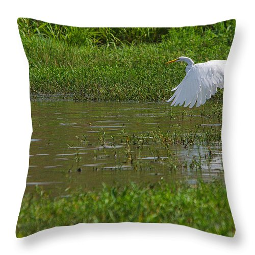 Bird Throw Pillow featuring the photograph Great Egret Takeoff 2 by Roy Williams