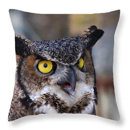 Doug Lloyd Throw Pillow featuring the photograph Great Horned Owl by Doug Lloyd