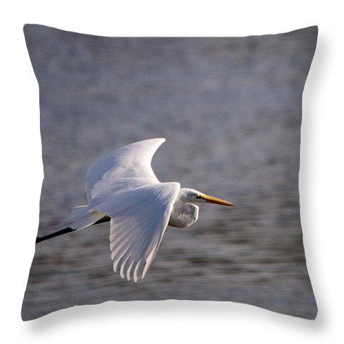Egret Throw Pillow featuring the photograph Great White Egret Flight Series - 1 by Roy Williams