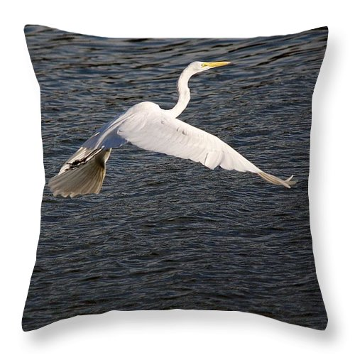 Egret Throw Pillow featuring the photograph Great White Egret Flight Series - 10 by Roy Williams