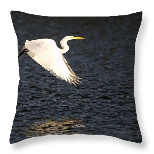 Roy Williams Throw Pillow featuring the photograph Great White Egret Flight Series - 11 by Roy Williams